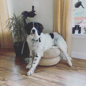 Sarah's dog Bridger